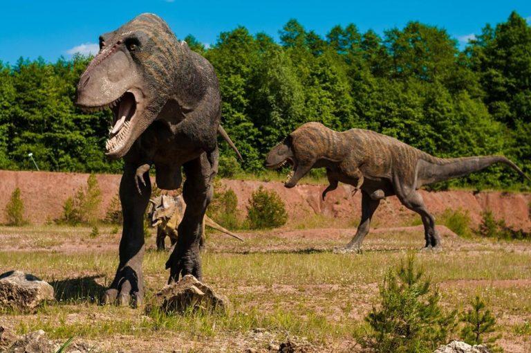 Bogactwo atrakcji jakie czeka na Ciebie w parku dinozaurów